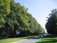 GP-L'avenue du Château_les tilleuls