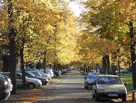 GP-L'avenue du Château_les voitures